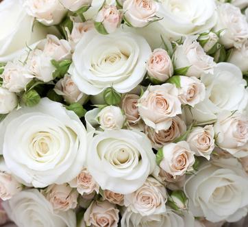 白ピンクのあふれる薔薇 プレシャスマリー京都烏丸